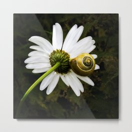 Daisy and snail Metal Print