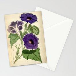 Flower 5720 pharbitis nil limbata White edged Pharbitis1 Stationery Cards
