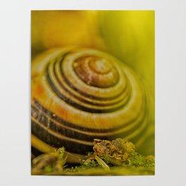 Beautiful Snail shell Poster
