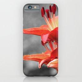 Orange Lily Flower Blossom, Lilium Digital Photography Close up, Black and White Background iPhone Case