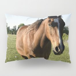 Brown Horse in a Pasture Pillow Sham