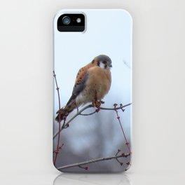 Sparrowhawk (Kestrel) 1 iPhone Case