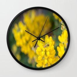 Ladybug in a Yellow Lupin, Dunedin, New Zealand Wall Clock
