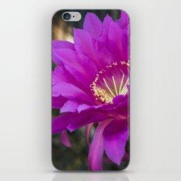 Echinopsis in Hot Pink iPhone Skin