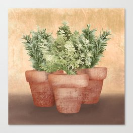 Rosemary and Thyme Canvas Print