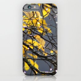 Yellow Birch Leaves, Raindrops, & Sunlight 2 iPhone Case