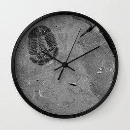 Utah - Trilobite Fossil Shards Wall Clock