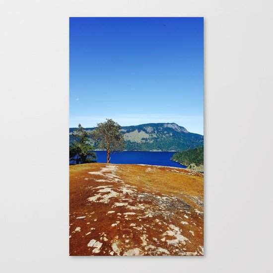 Lone Arbutus, Mid Afternoon Stoney Hill Canvas Print