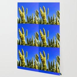 On the field Wallpaper