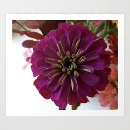 Purple Zinnia Art Print
