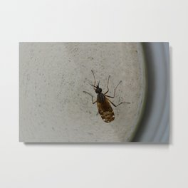 just a fly on the wall Metal Print