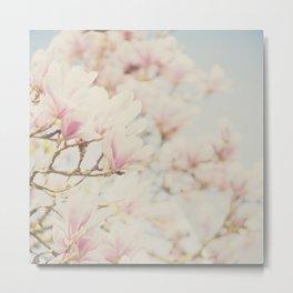 pink magnolia blossoms ... Metal Print