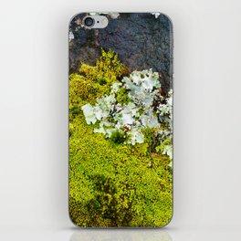Tree Bark with Lichen#8 iPhone Skin