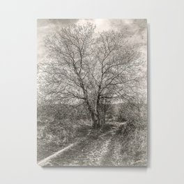 The tree on the road Metal Print