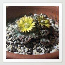 Blooming Jewel Plant Art Print