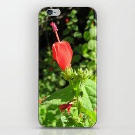 Arboretum Flower- Color iPhone Skin