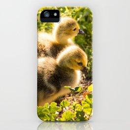 Gosling Pair in Monterey, California iPhone Case