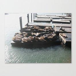Sealions at the Bay, San Francisco, California Canvas Print