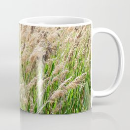 Blooming foxtail in summer sunny day Coffee Mug