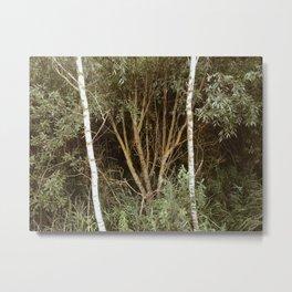 Between two birches Metal Print