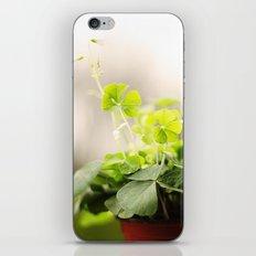 Shamrocks iPhone & iPod Skin