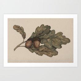 Acorns Art Print