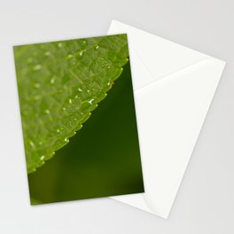 Floral Leaf 05 | Nature Photography Stationery Cards