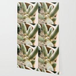 cholla cactus Wallpaper