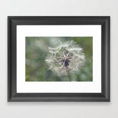 Tragopogon -Meadow Salsify 43 Framed Art Print