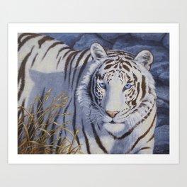 White Tiger with Blue Eyes Art Print
