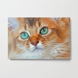 EYE CAT-CHING Metal Print