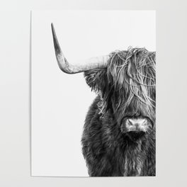 Highland Cow Portrait - Black and White Poster