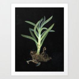 Sebastian Art Print
