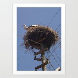 Storks on Electric Pylon  Art Print