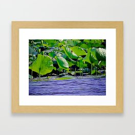 Lilly C. Pond Framed Art Print