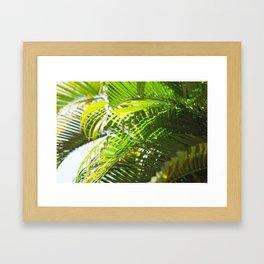 78. Palm Tree Pattern, Cuba Framed Art Print