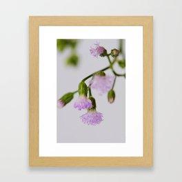 violets Framed Art Print