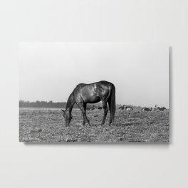 Black Horse Grazing w/ Geese Metal Print