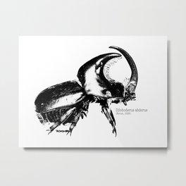 Diloboderus Metal Print