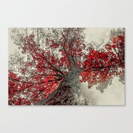Widen Canvas Print
