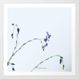 Blue Flax highkey SOOC by CheyAnne Sexton Art Print