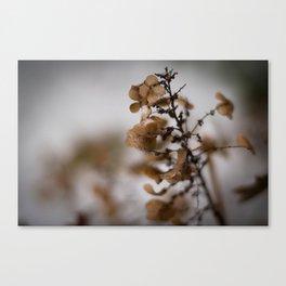 Georgia Brown Flowers Canvas Print