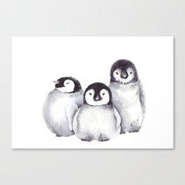 Baby Penguins Canvas Print