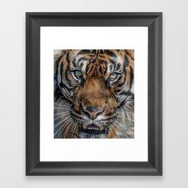 Tiger's Eyes Framed Art Print