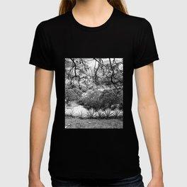 Oaxaca Mountain T-shirt