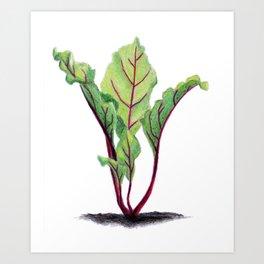Red beet plant pencil drawn Art Print