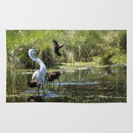 The Ibis Ignore the High Drama at the Pond Rug