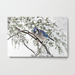 April Fools' Jay Metal Print