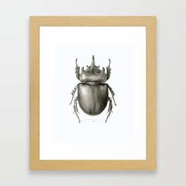 Ox Beetle/Strategus antaeus Framed Art Print