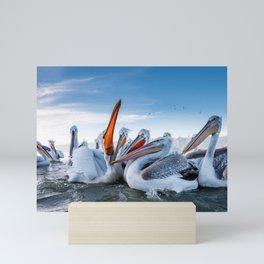 Group Of Spectacular Beautiful Pelican Fishing Feeding Close Up Ultra HD Mini Art Print